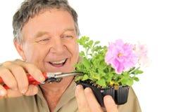Nurseryman Prunes Seedling Stock Image