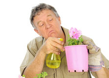 Nurseryman Sprays Seedlings. Fussy and careful middle aged gardener sprays a plant in a pot stock photo
