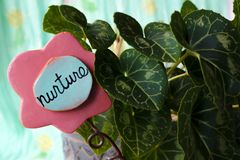 Nurture. Sign in a cyclamen plant by the window royalty free stock photography