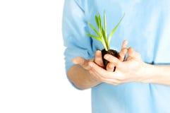 Nurtured Plant Held Carefully Stock Photos