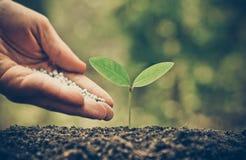 Nurturing baby plant with chemical fertilizer Stock Photos