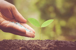 Nurturing baby plant with chemical fertilizer Royalty Free Stock Image