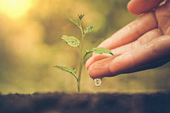 Nurturing baby plant Royalty Free Stock Photos