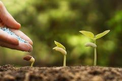 Nurturing baby plant Stock Images