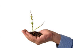 Nurturing growth Stock Photo