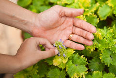 Nurturing Hands Royalty Free Stock Photos