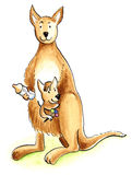 Nurturing kangaroo Royalty Free Stock Photography