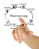 Nurturing. Presenting diagram of Lead Nurturing Stock Photo