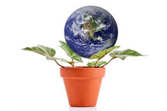 Nurturing The Planet Royalty Free Stock Images