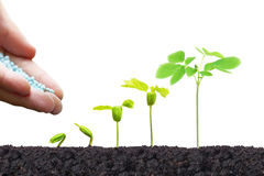 Free Nurturing Young Baby Plants Royalty Free Stock Image - 83513896