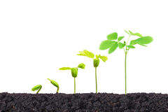 Nurturing young baby plants Royalty Free Stock Photos