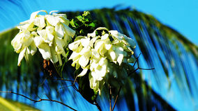 Nusa Indah Flower Royalty Free Stock Photos