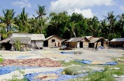 Nusa-lembongan Meerespflanzebauernhof Lizenzfreie Stockfotos