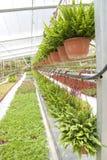 Nusery garden Royalty Free Stock Image