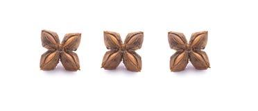 Nuss-Inkas, sacha inchi Erdnusssamen auf wei?em Hintergrund lizenzfreie stockfotos