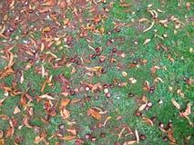 Nussartiges Gras lizenzfreies stockfoto