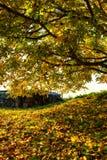 Nussbaum im Herbst Stock Image