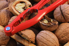 Nut Stock Images
