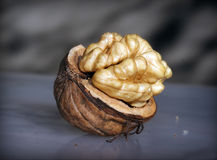 Nut Royalty Free Stock Images