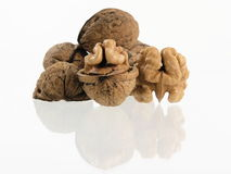 Nut. S isolated stock photography