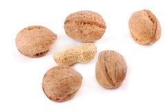 Nut Royalty Free Stock Image