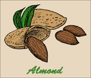 Nut almond Royalty Free Stock Photos