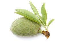 Nut almonds Stock Photo