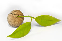 Nut And Leaves Stock Image