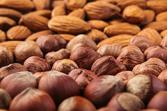 Nut background of different nuts - almond, hazelnut and kernel close-up. Stock Photo