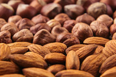 Nut background of different nuts - almond, hazelnut and kernel close-up. Vegetarian background stock image