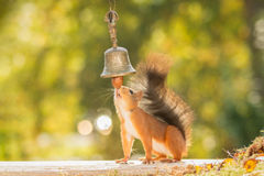 Nut bell Stock Image
