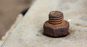 Nut on the cement Stock Photography
