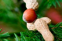 Nut on christmas tree Stock Image