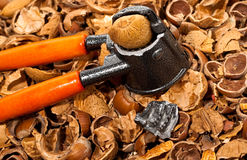 Nut ckacker Stock Images