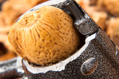 Nut Close up Stock Image