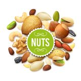 Nut Collection Illustration Royalty Free Stock Image