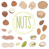 Nut collection. Walnuts, almonds, pistachios, peanuts, hazelnuts. Set of vector hand drawn nuts, shelled and whole. Royalty Free Stock Image