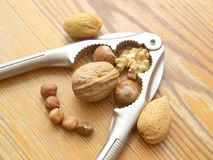 Nut Face Stock Images