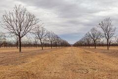 A Nut Farm in New Mexico During Winter. A New Mexico nut farm in winter, with bare trees royalty free stock images