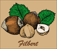 Nut filbert. Hand drawing set of vector sketches Stock Image