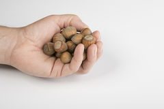 Nut fruit. Some nuts on the hand stock photography