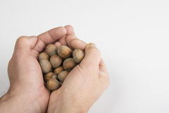 Nut fruit. Some nuts on the hand Royalty Free Stock Image