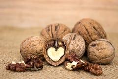Nut group Stock Image