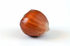Nut Royalty Free Stock Image