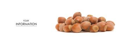 The nut hazel pattern. On white background isolation royalty free stock photos
