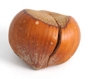 Nut, Hazelnut Stock Photos