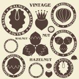 Nut. Hazelnut. Walnut Stock Photo