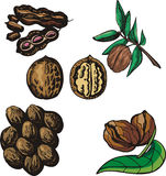 Nut illustration series Royalty Free Stock Photos