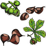 Nut illustration series Royalty Free Stock Image