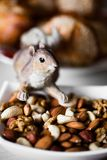 Nut mix Royalty Free Stock Images
